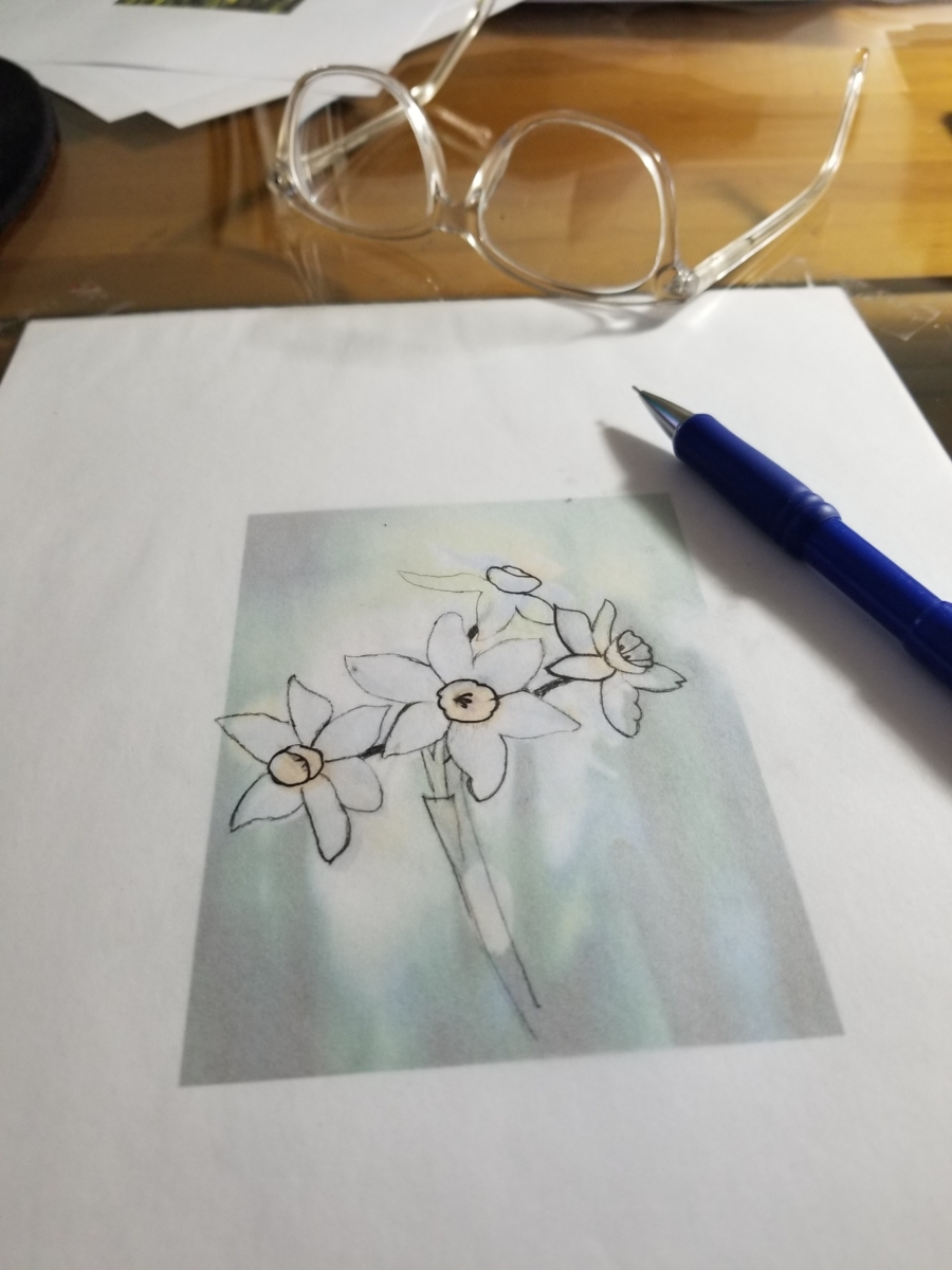 Daffodil Drawing